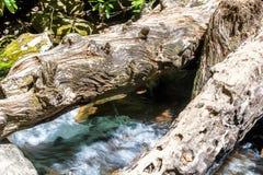 Puszków drzewa płynie nad whitewater Obraz Stock