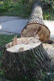puszka rżnięty drzewo Zdjęcie Stock