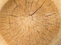 puszka rżnięty drzewo Zdjęcia Royalty Free