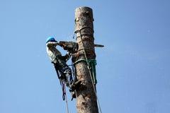 puszka tnący drzewo fotografia stock