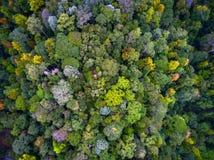 puszka tropikalny las deszczowy wierzchołek Obrazy Stock
