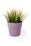 puszkująca roślinnych Obraz Stock
