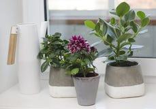puszkująca roślinnych zdjęcie stock
