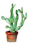 puszkujący kaktusowi nopales Zdjęcia Stock