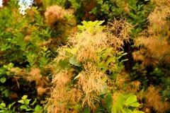 Puszysta roślina Obraz Stock