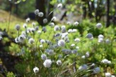 Puszysta roślina Zdjęcia Stock