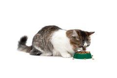 Puszystego kota łasowania suchy jedzenie na białym tle Fotografia Stock