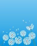 puszysty dandelion biel Obrazy Royalty Free