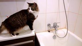 Puszysty domowy kot w łazience Ogląda gdy pisać na maszynie woda w balii Jakby okaleczający i zaskakujący, ale ciekawy zbiory wideo