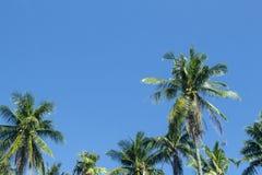Puszysty drzewko palmowe las na pogodnym niebieskiego nieba tle Drzewko palmowe korona z zielonym liściem na niebie Obrazy Royalty Free