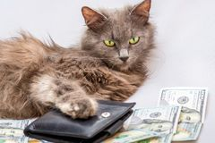 Puszysty kot kłama blisko kiesy i dolarów Symbol a fotografia stock
