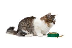 Puszysty kota obsiadanie blisko pucharu z jedzeniem na białym tle Obrazy Stock