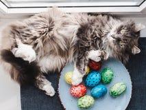Puszysty, szary kot, i Wielkanocni jajka Fotografia Royalty Free