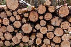Put together a pile of wood in the forest Stock Photos
