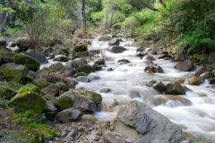 Putah Creek tributary in the Spring stock image