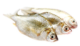 Puti fish Stock Photos