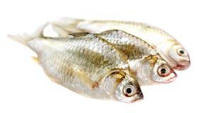 Puti fish. Over white background Stock Photos