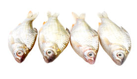 Puti fish Royalty Free Stock Photo