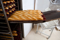 Puting fresh baked baguette bread into the rack Stock Images
