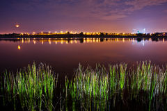Putrajaya Lake. View of Putrajaya Lake, Malaysia at night with water reeds in the foreground and streetlights at the background Royalty Free Stock Image