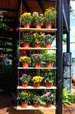 PUTRAJAYA, MALÁSIA - 30 DE MAIO DE 2016: Flores plantadas em uns potenciômetros feitos do plástico Os potenciômetros de flor que  Foto de Stock Royalty Free