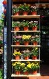 PUTRAJAYA, MALAISIE - 30 MAI 2016 : Fleurs plantées dans des pots faits de plastique Les pots de fleur accrochant ou placés sur u Photographie stock libre de droits