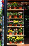 PUTRAJAYA, MALAYSIA -MAY 30, 2016: Flowers planted in pots made of plastic. The flower pots hanging or placed on a shelf as a vert Royalty Free Stock Photography