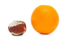 Putrefaction orange Royalty Free Stock Image