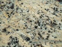 Putrefy stone. Show structure of putrefy stone in nature stone in sea ocean Stock Images