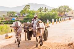PUTTAPARTHI, 22, 2017: ANDHRA PRADESH INDIA, LIPIEC - Indiańscy byki w nicielnicie Odbitkowa przestrzeń dla teksta Obraz Stock