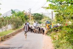PUTTAPARTHI, ANDHRA PRADESH, INDIEN - 9. JULI 2017: Schäfer und eine Herde von Ziegen Kopieren Sie Raum für Text Lizenzfreie Stockbilder