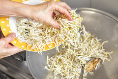 Putting bean sprout Stock Photo
