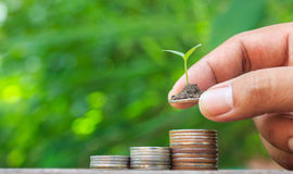 Putting coins stacked and seedlings on top. Royalty Free Stock Photos