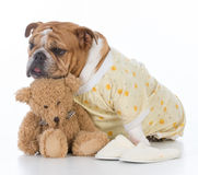 putting the dog to bed Stock Photo