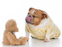 Putting the dog to bed Royalty Free Stock Image