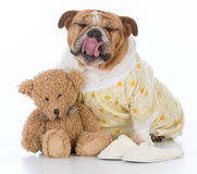 putting the dog to bed Stock Images
