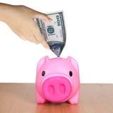 Putting dollar in funny piggy bank. Stock Photos