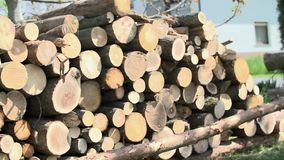 Putting down long log for stocking lumber on stock video footage