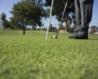 Putting and Golfer. Man poised to make a putt Stock Photos