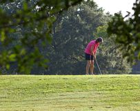 Putting on the Green. Lady golfer putting on the green. Photographed at Largo Central Park, Largo Florida Stock Photos
