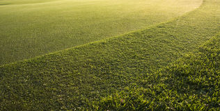 Putting Green close up Royalty Free Stock Photos