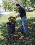 Putting Leaves In A Trash Can Royalty Free Stock Image