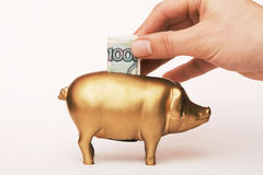 Putting money into Piggy Bank Stock Image