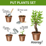 Putting  Plants Icons Set Stock Image