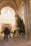 Putting up the Christmas tree in Bamberg Cathedral Royalty Free Stock Photos