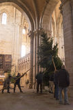 Putting up the Christmas tree in Bamber Cathedral Stock Images