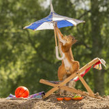 Putting up the parasol. Red squirrel  on a chair holding an umbrella with nut in mouth Stock Photo