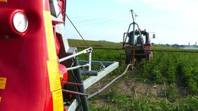 Putting up typhon irrigation system in a peppers field. Sunny summer day. stock footage