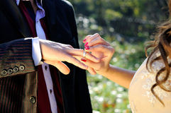 She putting wedding ring on his Royalty Free Stock Photography