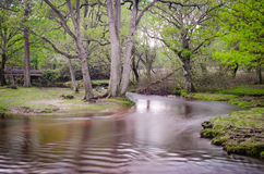 Puttles Bridge. A view of Hatchet Pond in the new forest national park Royalty Free Stock Image